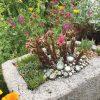 6.21.Garden Walk.1415 Grape St